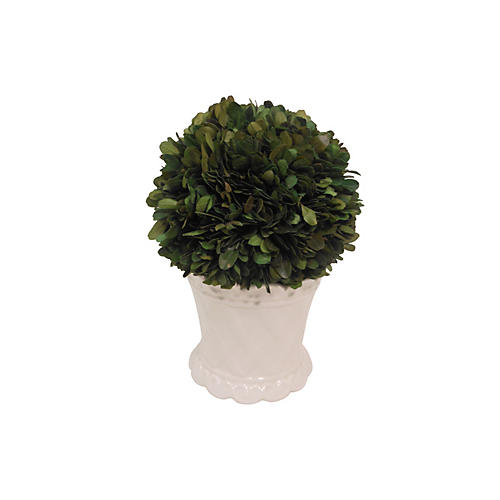 """8"""" Boxwood Ball in Cachepot, Faux"""