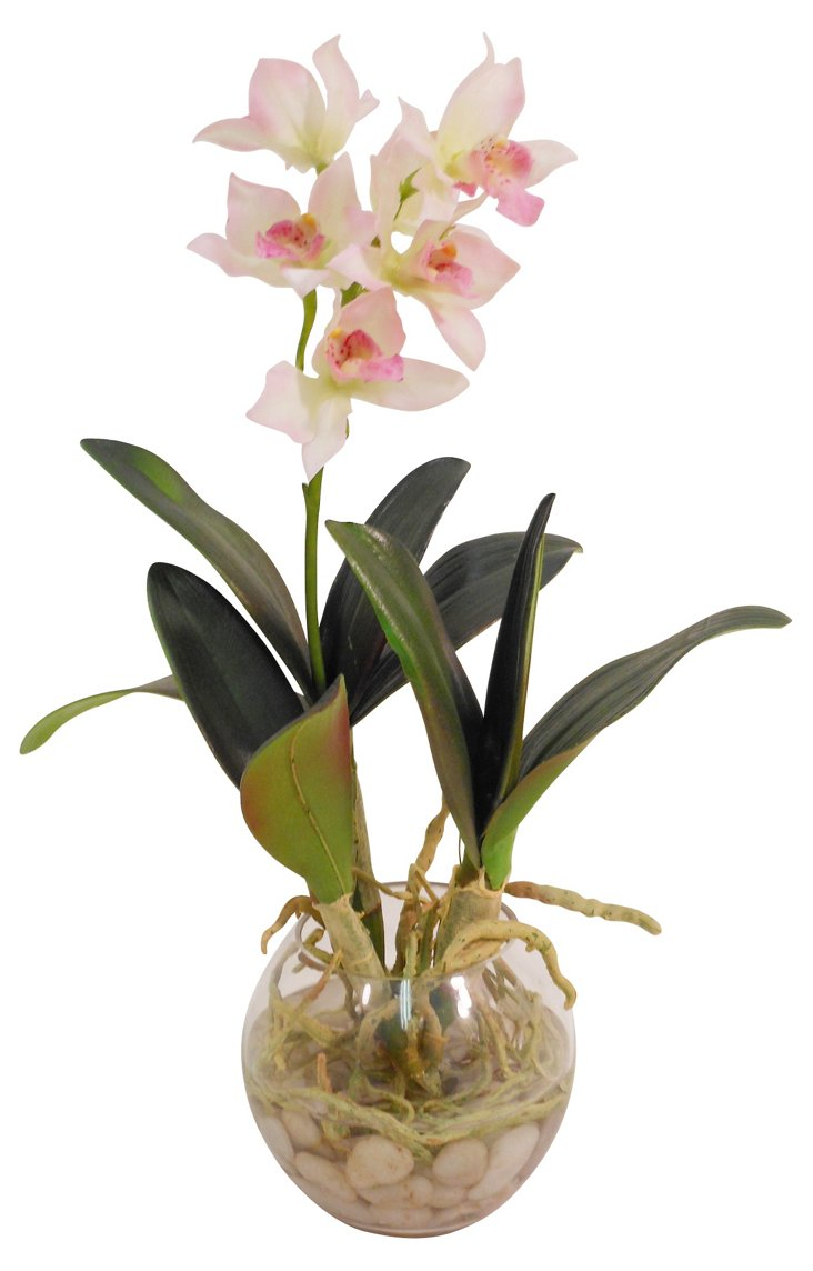 Dendrobium Orchid in Bowl, Pink