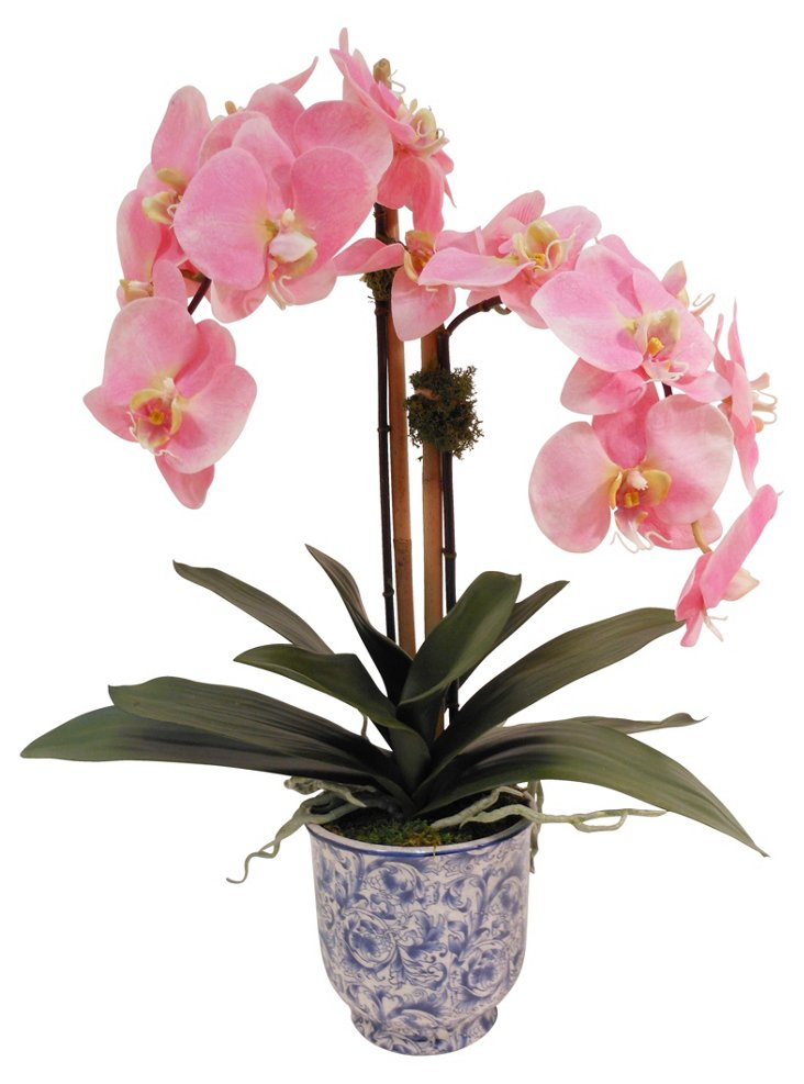 "24"" Phalaenopsis in Cachepot, Faux"