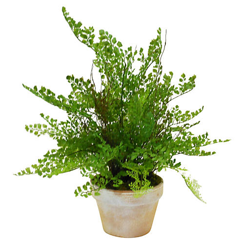 "19"" Maidenhair in Planter, Faux"