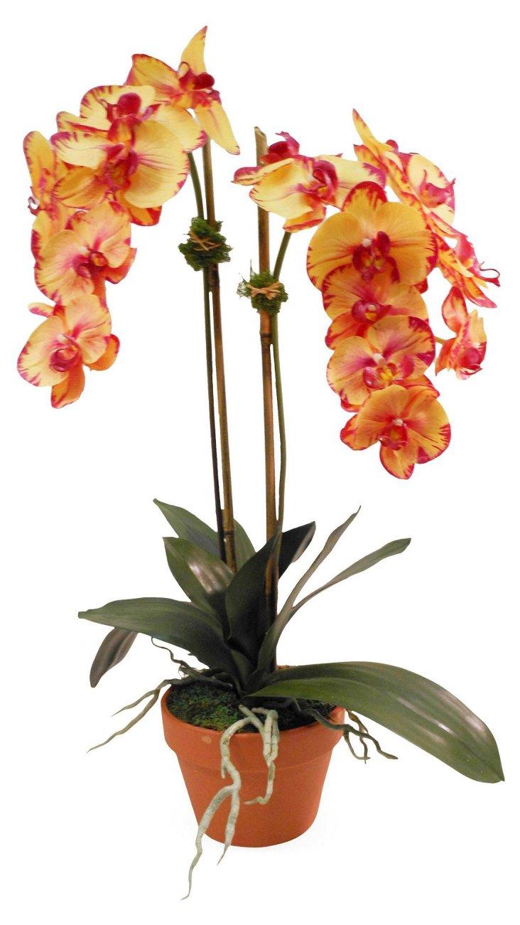 "26"" Phalaenopsis in Planter, Faux"