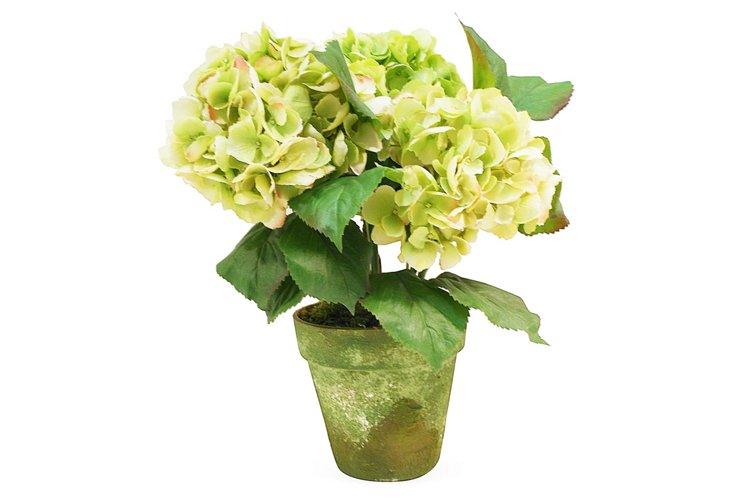 """17"""" Hydrangea in Terracotta Pot, Faux"""