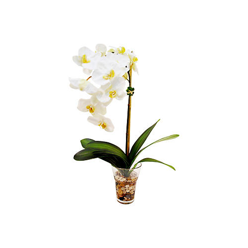 "27"" Phalaenopsis in Glass Vase, White"