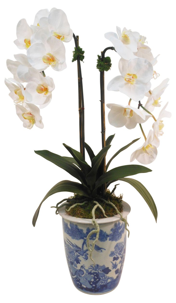 "28"" Orchid in Planter, Faux"