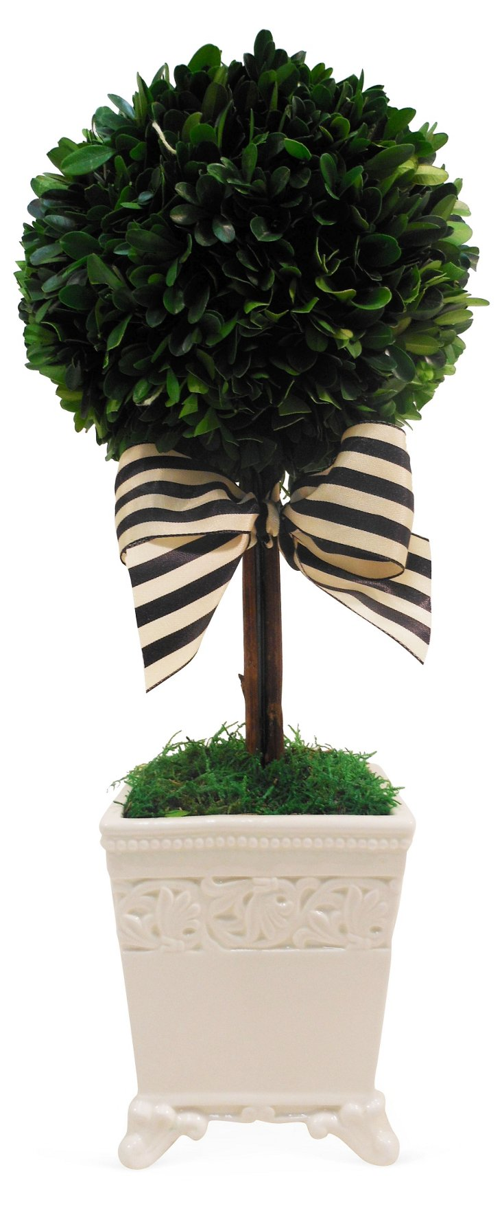 "16"" Boxwood Topiary, Preserved"