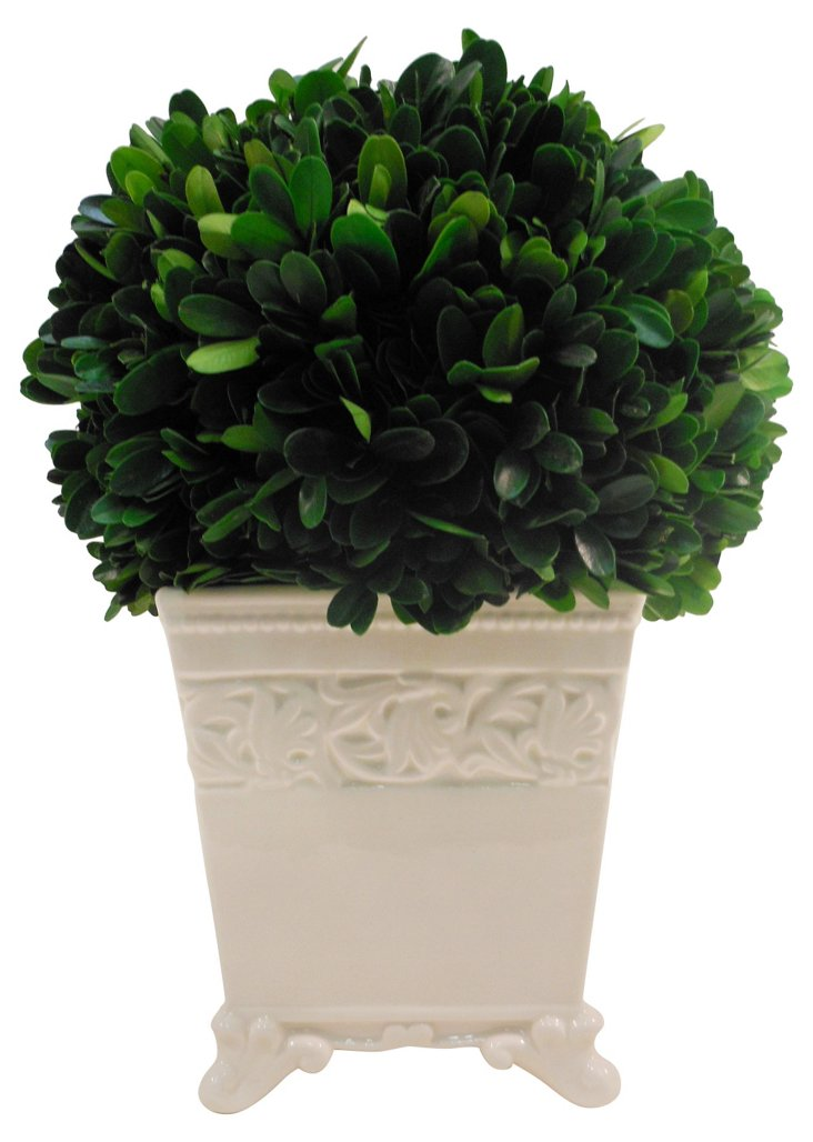 "10"" Boxwood Ball in  Planter, Preserved"