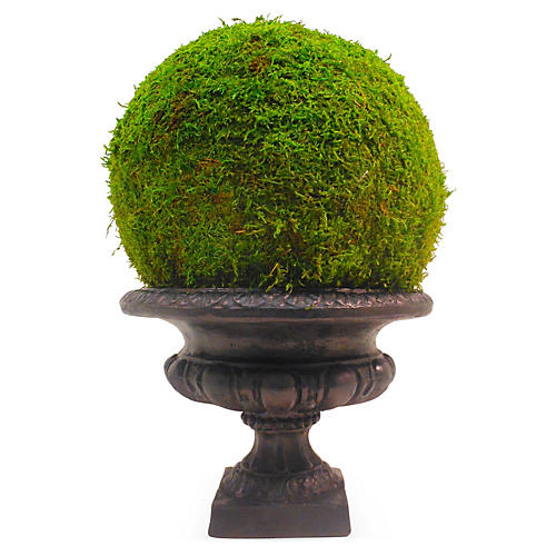"18"" Moss Ball in Urn, Preserved"