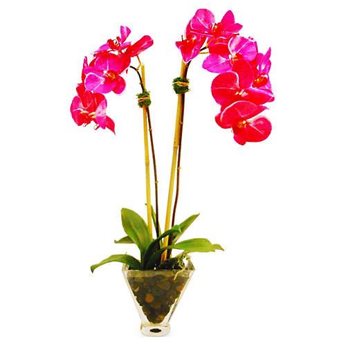 """25"""" Phalaenopsis in Tapered Vase, Pink"""