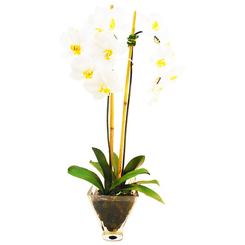 "29"" Phalaenopsis in Tapered Vase, White"