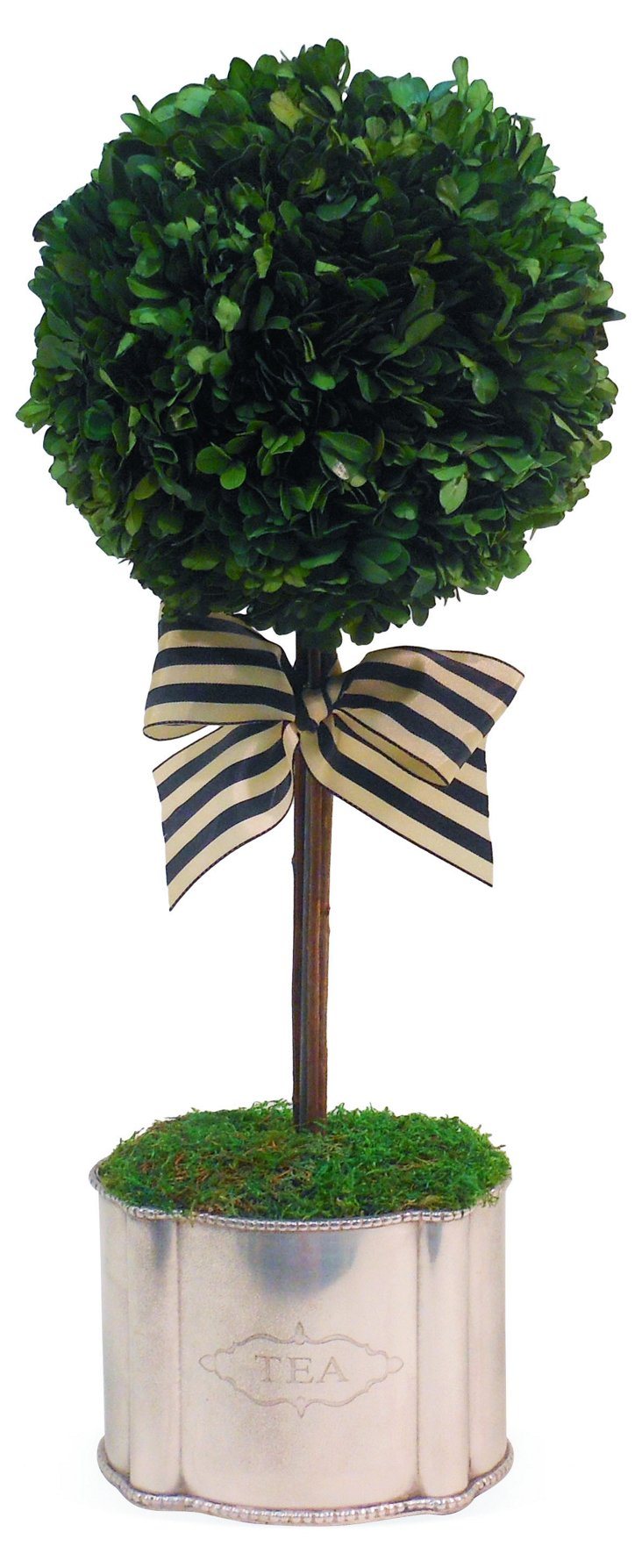 "20"" Boxwood Topiary, Preserved"