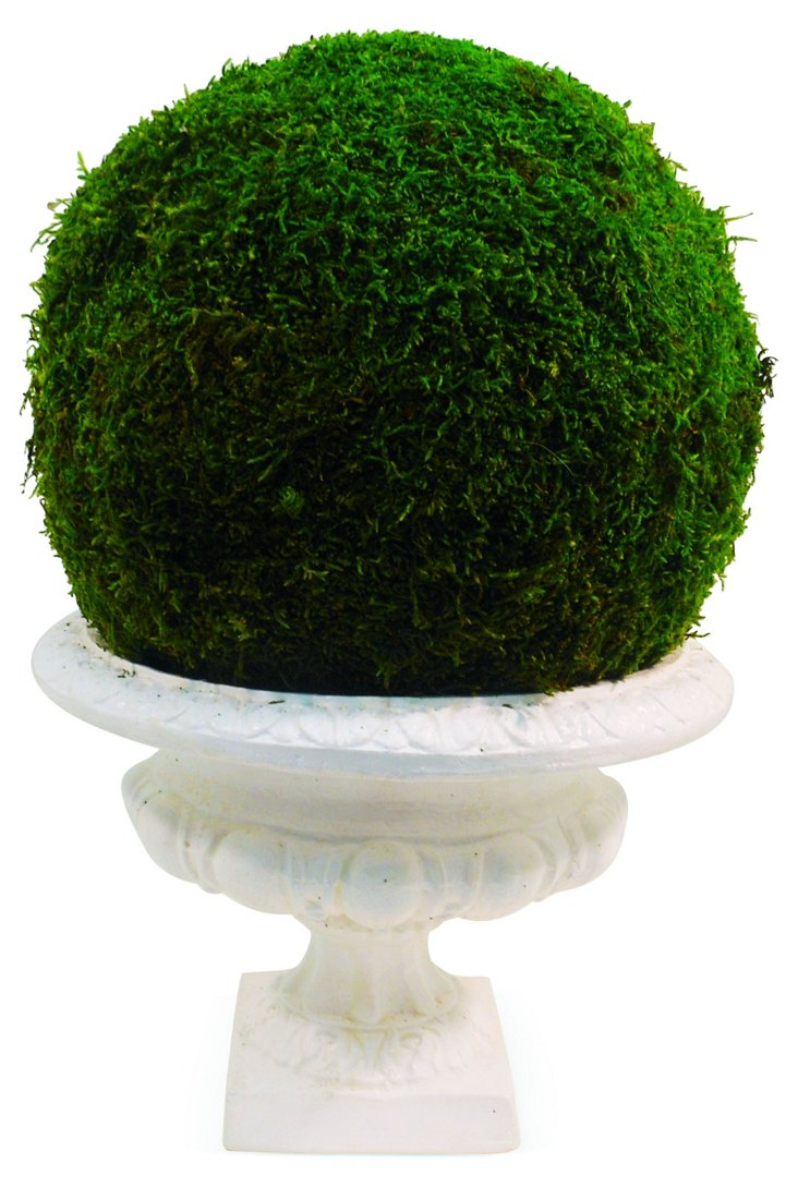 """18"""" Moss Ball in Urn, Preserved"""