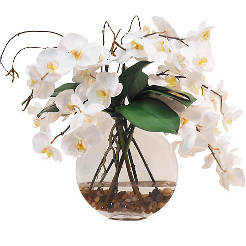 "21"" Phalaenopsis in Vase, White"