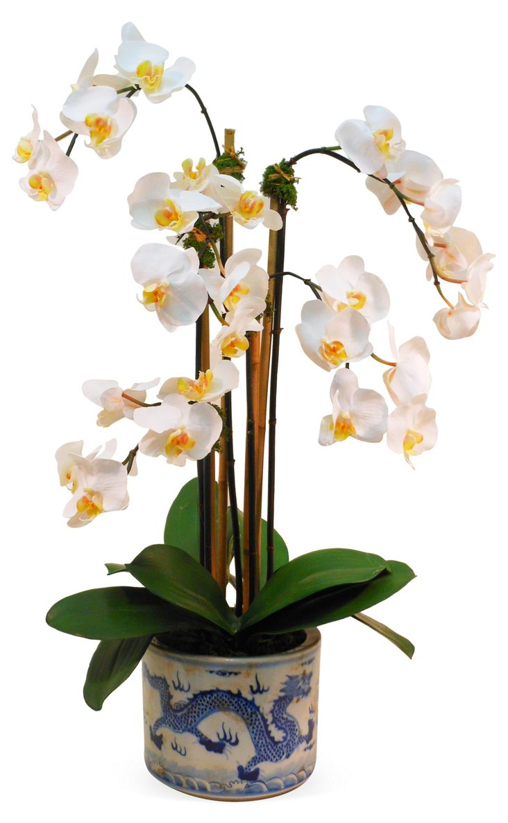 "28"" Phalaenopsis in Planter, Faux"
