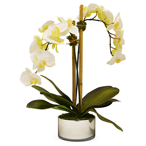 "21"" Phalaenopsis in Mercury Bowl, White"
