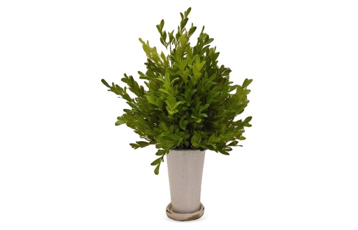 "16"" Boxwood Branches in Julep Cup, Faux"