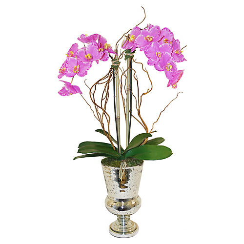 "33"" Phalaenopsis w/ Curly Willow, Faux"
