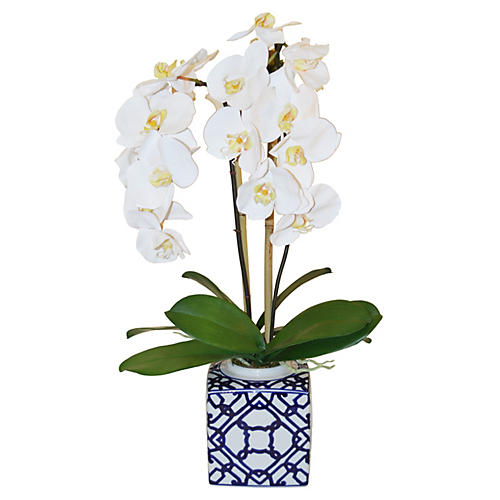 "26"" Phalaenopsis Arrangment, Faux"