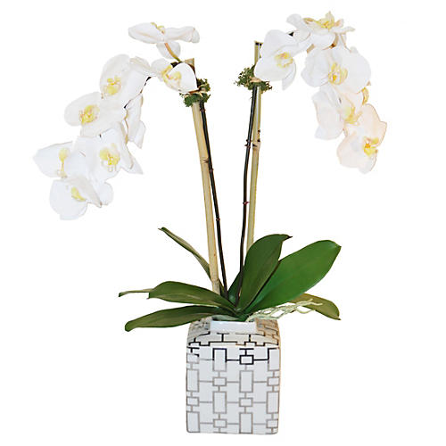 "27"" Phalaenopsis in Pot, Faux"