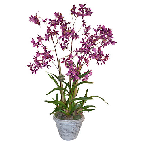 "37"" Orchid in Planter, Faux"