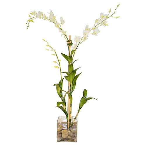 "45"" Dendrobiums in Rocks, White"