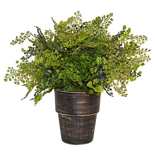 """22"""" Fern in Terracotta Planter, Faux"""
