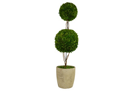 Double  Topiary in Planter, Preserved