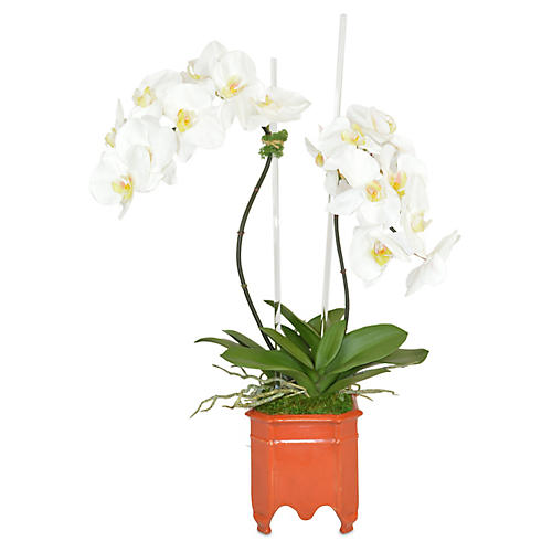 "28"" Orchids Planter Arrangement, Faux"