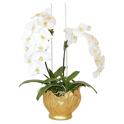 "30"" Phal Orchids Round Arrangement, Faux"