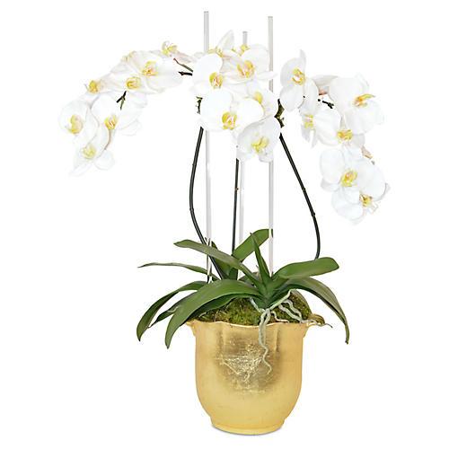 """31"""" Phal Orchids Round Arrangement, Faux"""