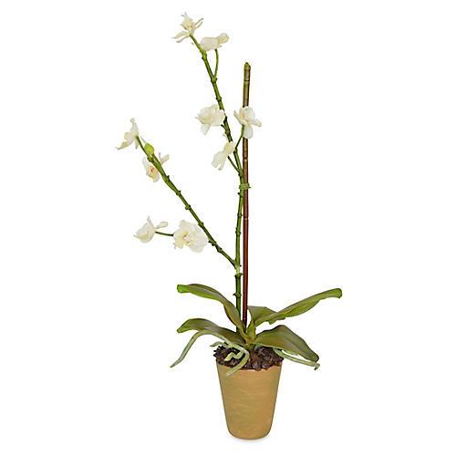 """20"""" Mini Orchid Arrangement, Faux"""