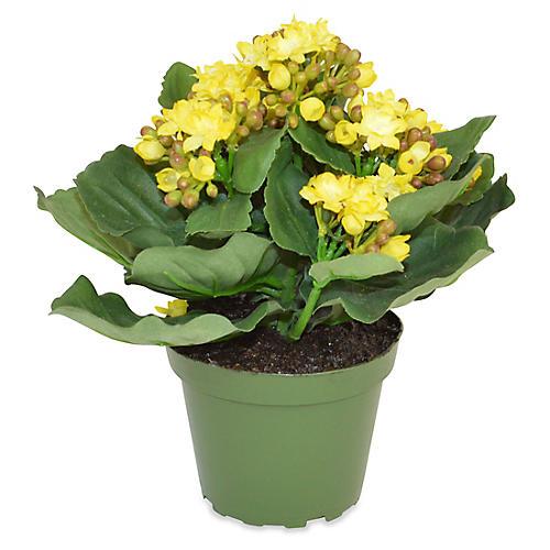 """8"""" Clare Kalanchoe Plant, Faux"""