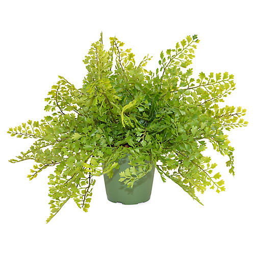 "14"" Mini Maidenhair Fern Plant, Faux"