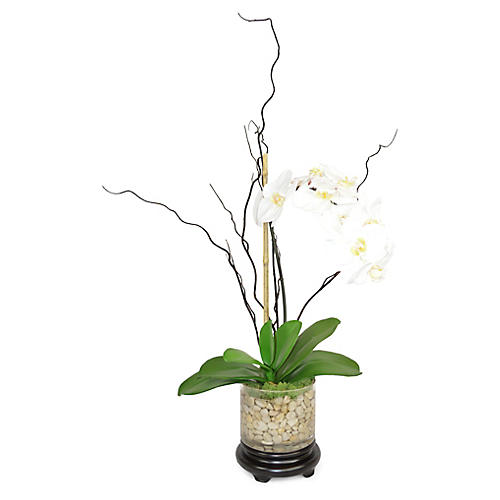 """29"""" Darwin Phal Orchid Arrangement, Faux"""
