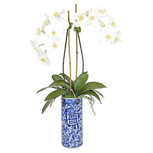 """32"""" Alma Phal Orchid Arrangement, Faux"""