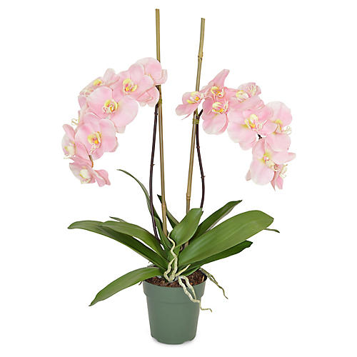 "30"" Francis Phal Orchid Plant, Faux"