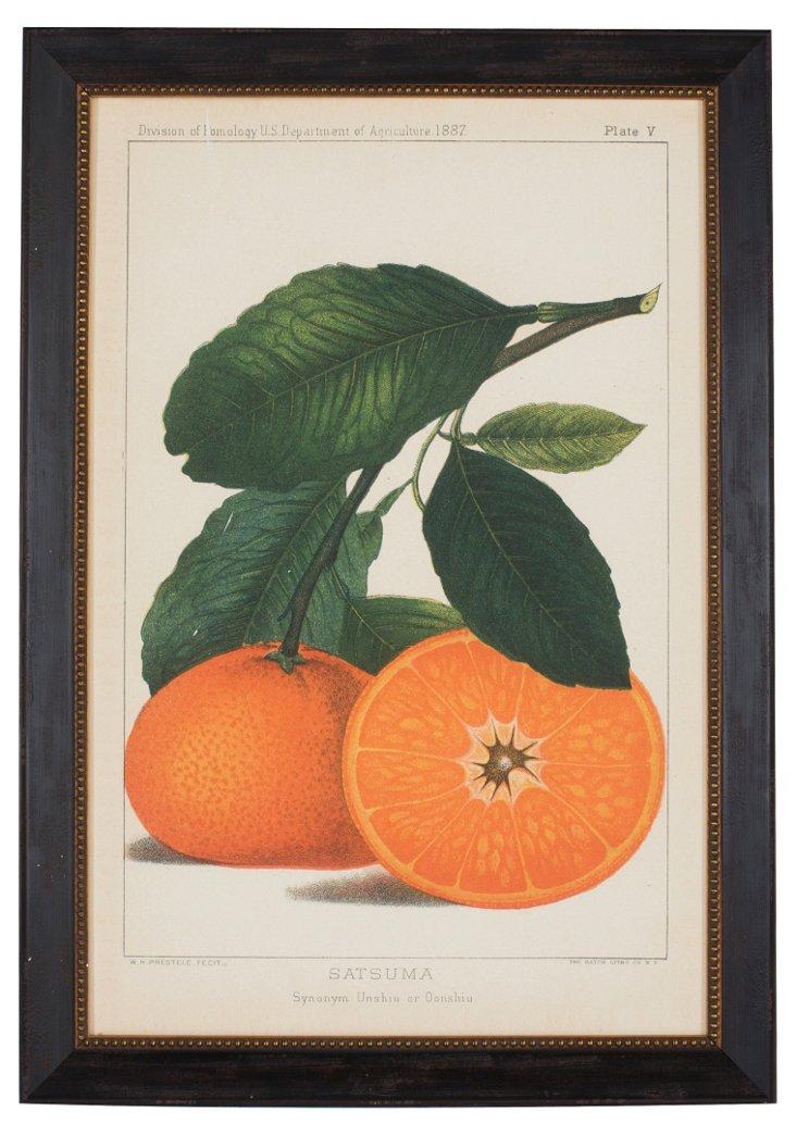 Oranges Art
