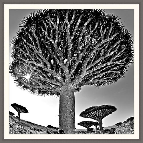 Lillian August, Desert Tree