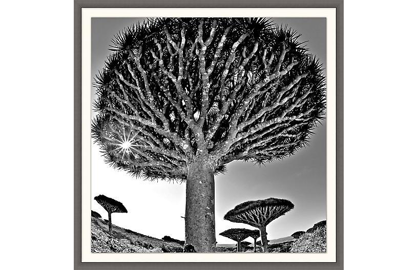 Lillian August, Desert Tree
