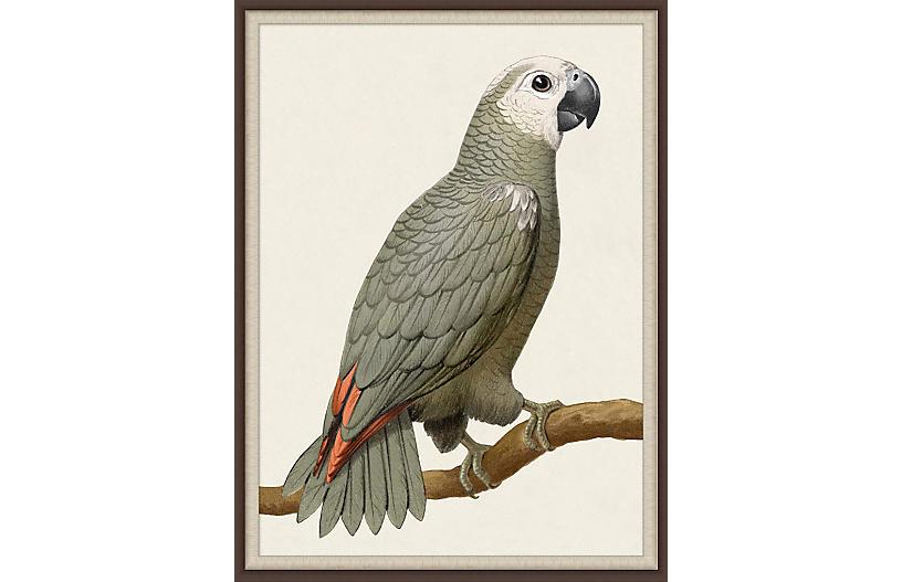 Lillian August, Gray Parrot 1