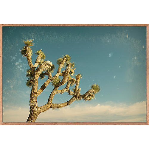 Antique Yucca 1, Nancy Pastor