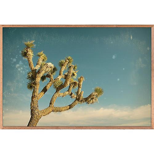 Nancy Pastor, Antique Yucca 1