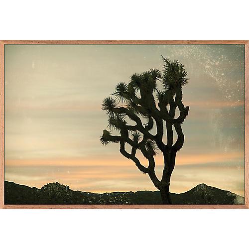 Antique Yucca Sunset, Nancy Pastor