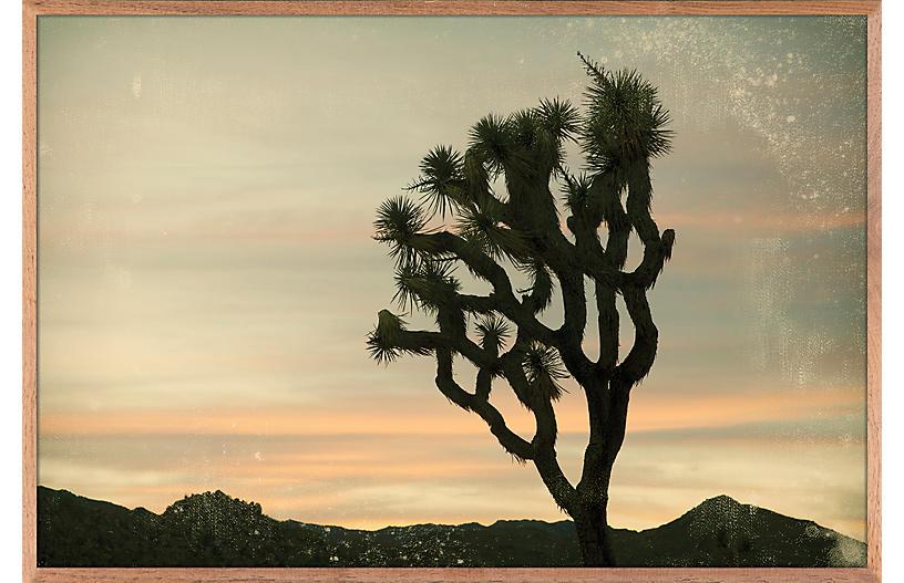 Nancy Pastor, Antique Yucca Sunset