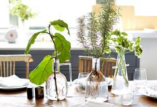 The secret behind these stunning no maintenance plants for No maintenance house plants