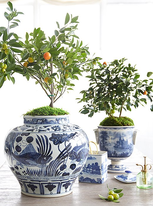 Potting an Indoor Tree in 3 Easy Steps – One Kings Lane — Our ...