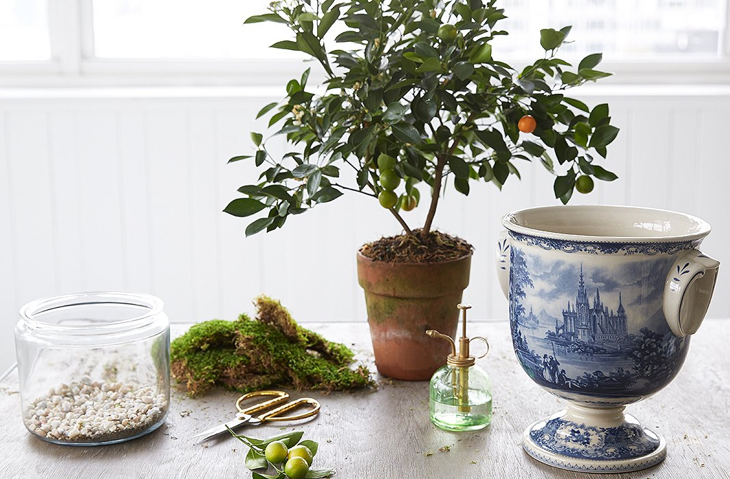 Potting an Indoor Tree in 3 Easy Steps – One Kings Lane — Our Style Blog