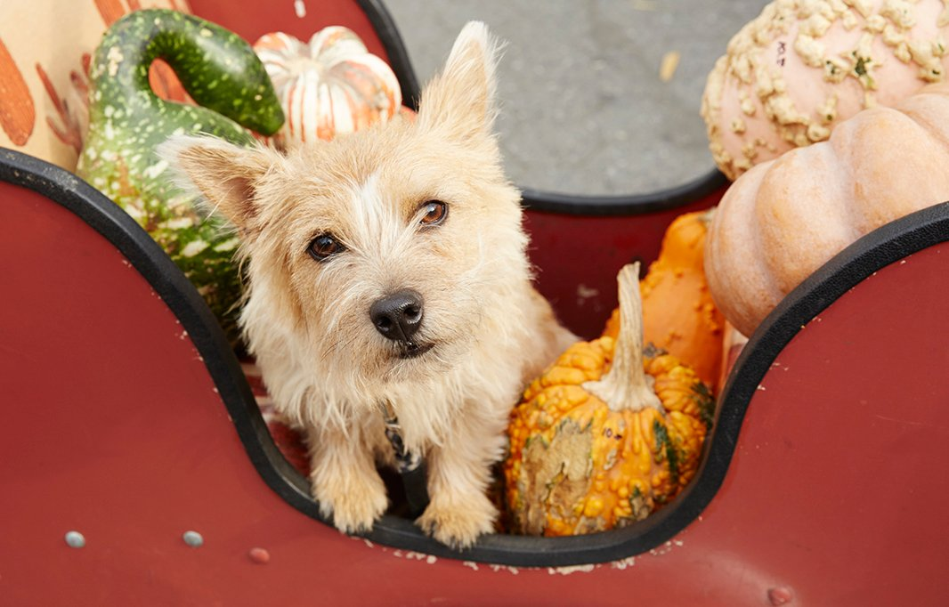 Lela often rides her cargo bike to the Greenmarket to shop for parties, accompanied by her dog Bobbin.