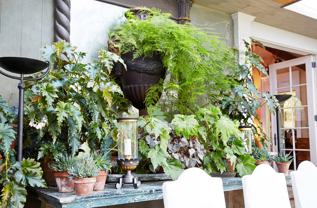 Antique mirrors, graceful hurricane lamps, and marble-top tables add elegance to a room filled with plants.