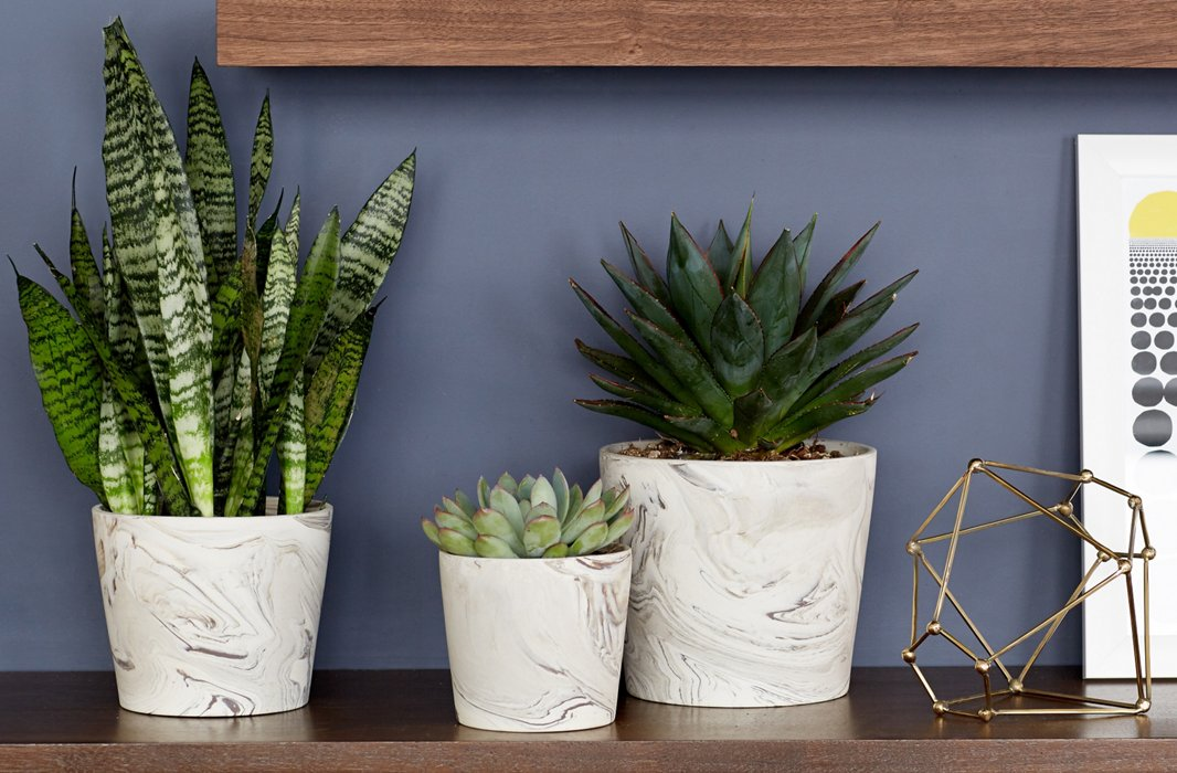 A trio of plants in marbleized pots adds fresh life to the only wall that doesn't get natural light.