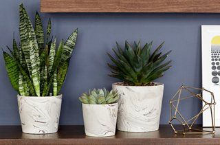 Beau A Trio Of Plants In Marbleized Pots Adds Fresh Life To The Only Wall That  Doesn